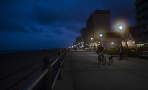 Boardwalk With Dog